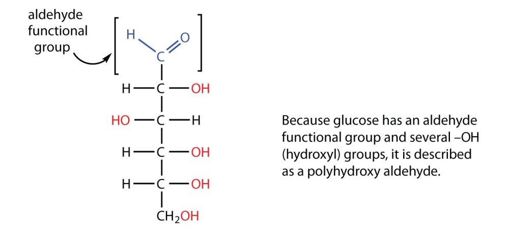 medium resolution of glucose bond diagram