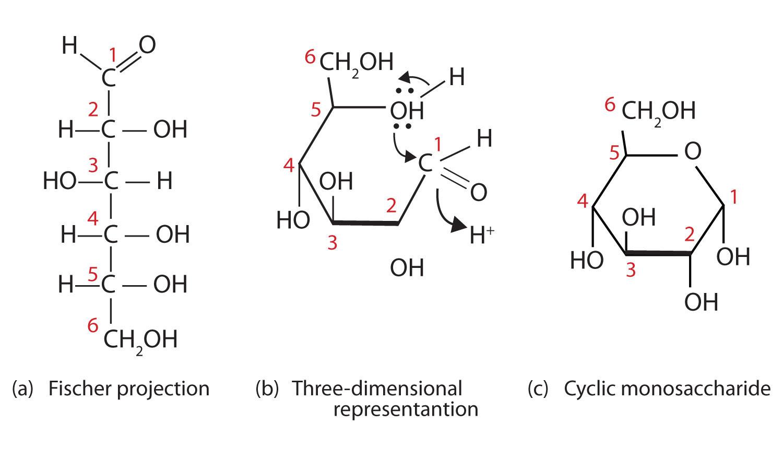 hight resolution of glucose bond diagram