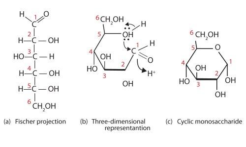 small resolution of glucose bond diagram