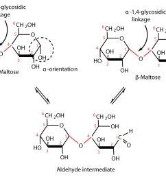 glucose bond diagram [ 1499 x 957 Pixel ]