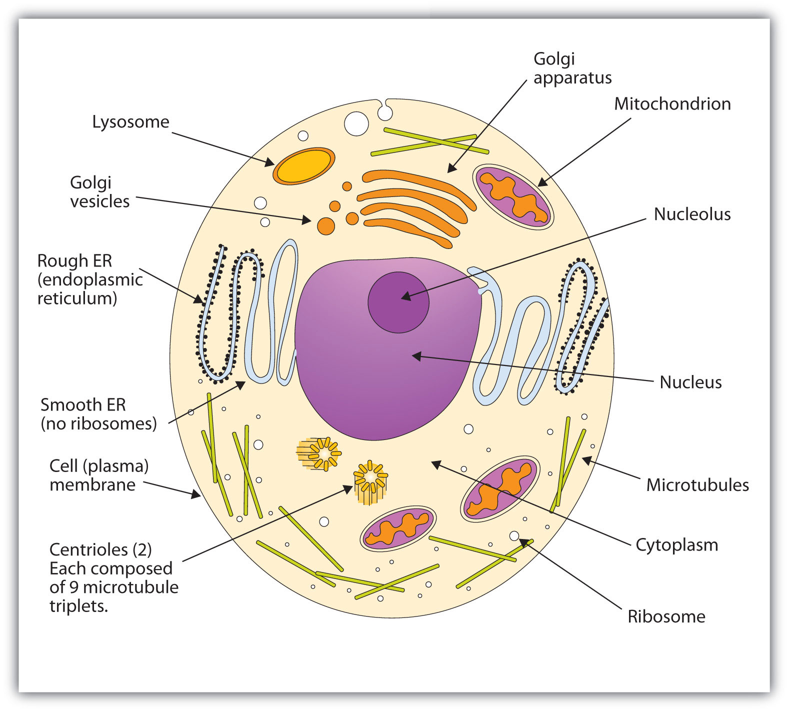 cell membrane diagram picture of water cycle membranes and lipids