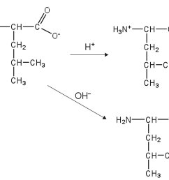 answers this amino acid  [ 1500 x 939 Pixel ]