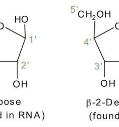 dna nucleotide and basis diagram [ 1500 x 525 Pixel ]