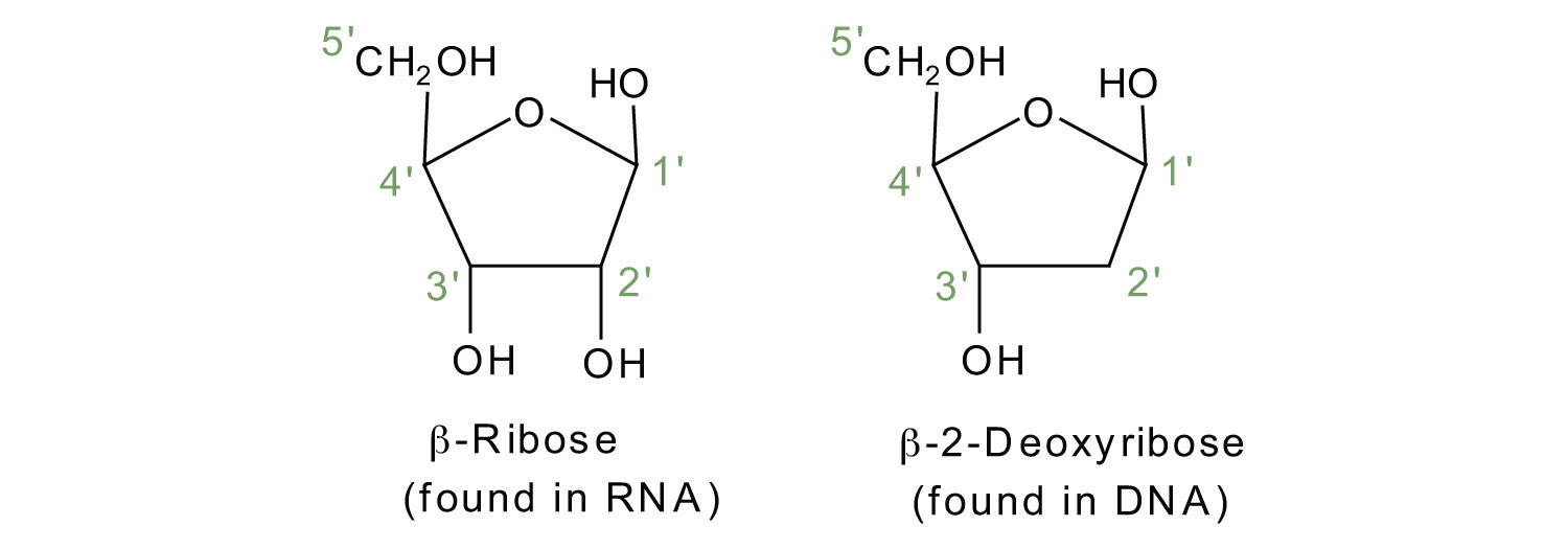 hight resolution of dna nucleotide and basis diagram