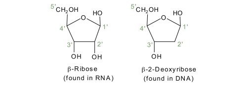 small resolution of dna nucleotide and basis diagram