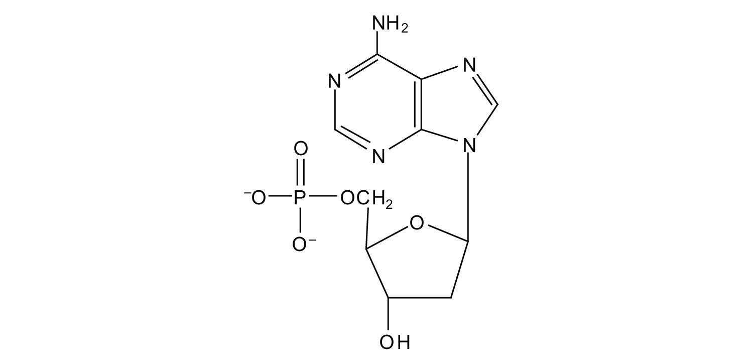 hight resolution of for each structure circle the nitrogenous base and identify it as a purine or pyrimidine