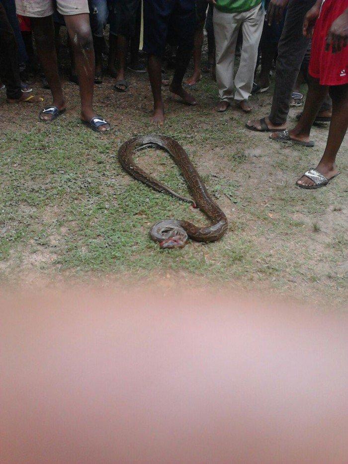 unizik snake