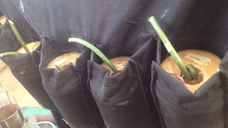 Nigerian Army Neutralize 3 Boko Haram Terrorists Female Suicide Bombers