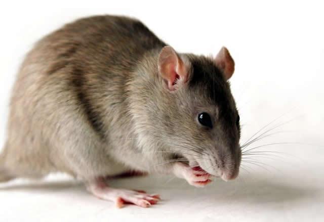 Rodents, weeds take over PDP national secretariat