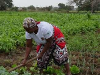 Women Backbone To Climate Change – AfDB