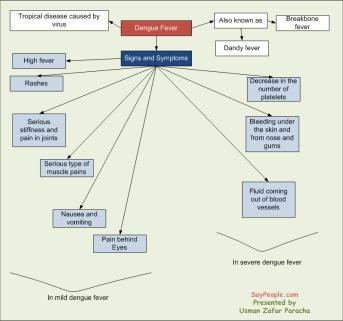 Signs and Symptoms of Dengue Fever