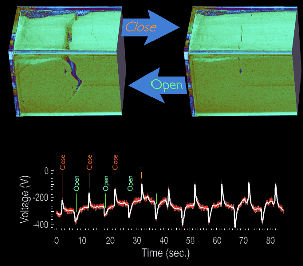 Electrical spikes of 100 volts or more can result when a crack opens and closes in bed of powder under stress in a laboratory-scale experiment. (Image courtesy of Troy Shinbrot, Rutgers University.)
