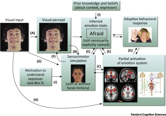 Simulation and the Recognition of Facial Expression (Image source: Wood et al., 2016)