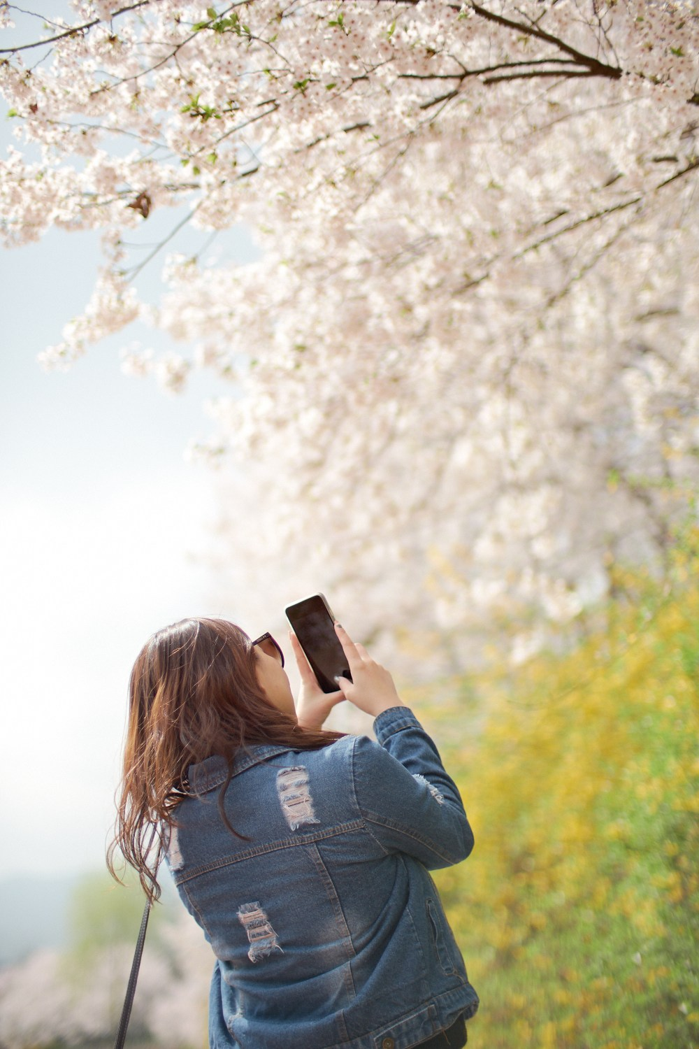 Photographer | Cherry blossom at Yangjaecheon Seoul South Korea