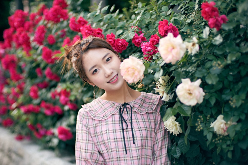 Photographer | Summer roses in Seoul South Korea