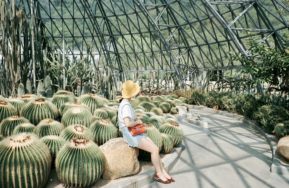 Shenzhen Fairy Lake Botanical Garden Cactus Greenhouse