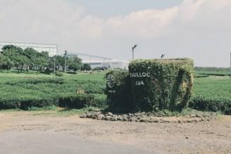 O'sulloc (오설록), Jeju.