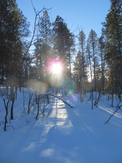 Snowy forest Lapland