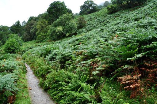 Loch Lomond West Highland Way trail