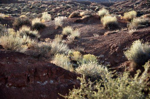 Monument Valley vegetation