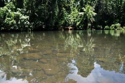 Marovo Lagoon river, Solomon Islands