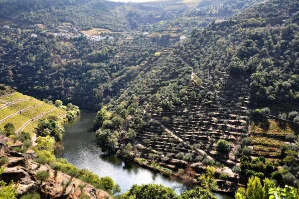 Doury Valley in Portugal