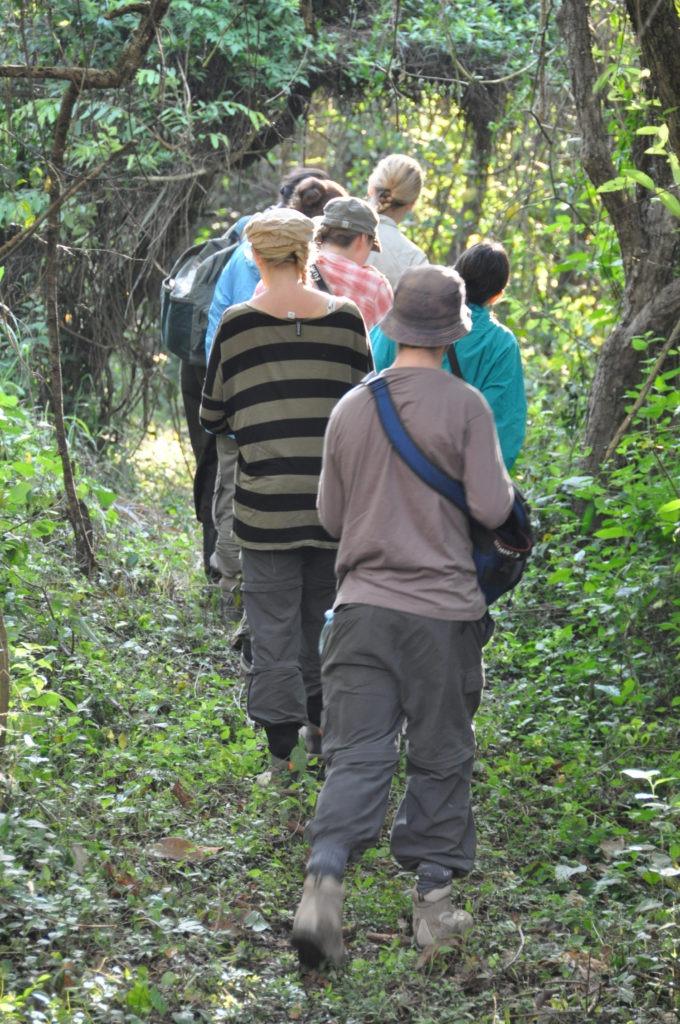 Tracking Chimpanzees in Budongo Forest, Uganda
