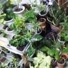 占領された部屋【oyageeの植物観察日記】