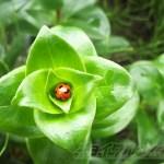 見知らぬ植物に… てんとう虫が頭隠して…