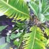 リアル・ジュラシックパーク体験! ─突然、自然界の生き物に出逢い、oyagee凍り付く─【oyageeの植物観察日記】