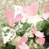 カズラ・フォーリンラブ・突然 ─ピンクのカズラに一目惚れ─【oyageeの植物観察日記】