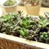 (多肉植物の先生になった気分で)BOX型鉢に寄せ植えをやってみた【oyageeの植物観察日記】