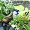 oyageeの「夏の思い出」 ─甥っ子が食べたサザエの貝殻を使い、7種の観葉植物の「ミニ寄せ植え」─【oyageeの植物観察日記】