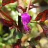 ヒポエステスに花が咲くってご存知でした? その他、あの時のヒポエステスは?の情報をお伝えします!【oyageeの植物観察日記】