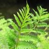 何故、葉がパラパラ落ちるンダ? 一昨日植え替えたジャガランダ、これじゃあダメ!ジャン…【oyageeの植物観察日記】