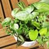 観葉植物の寄せ植え vol.1|ありふれた小型の観葉植物7種を使ってやってみましたが、食い意地張ったビュッフェ状態に !?【oyageeの植物観察日記】