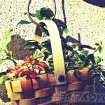100均グッズと廃プラで節約寄せ植え! 食品用保存容器とヨーグルトのふたを使い、吊って飾る「ハンギング仕立て」に!【oyageeの植物観察日記】