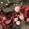 お宝発掘隊は今日も行く!vol.4[甥とスイーツ編]|スイーツ帰り、石垣に「多肉!お宝発見!」と喜んだら、甥っ子が「それ雑草だよ!」 ウソやん?【oyageeの植物観察日記】
