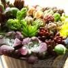 「春」を先取り!カラフルな鉢で多肉の寄せ植え・第14弾!|脇役的なセダムや多年草を植えたら、なんだか「野菜畑」に見えてきた !?「ベジタブル」【oyageeの植物観察日記】