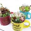「春」を先取り!カラフルな鉢で多肉の寄せ植え・最終回|3月3日の寄せ植えは、桃!桃!桃!のまさにピーチ祭り! ラストは「不思議なピーチパイ」【oyageeの植物観察日記】