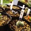 「多肉の寄せ植え、春の一掃週間」3日目! この寄せ植えの悪い原因は、室内での管理は非対応?【oyageeの植物観察日記】