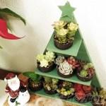 「多肉 ALL STARS de Christmas tree!」 19年のオールスターズに選ばれた品種はどの子たち?【oyageeの植物観察日記】