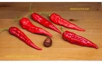 , Pěstování Zeleniny V První, Druhé A Třetí Trati