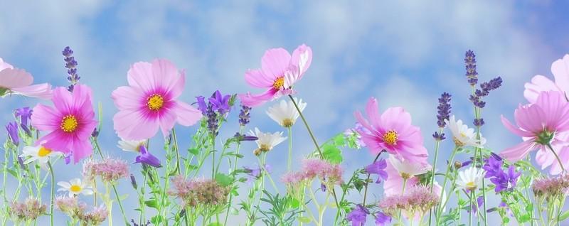 databaze květin