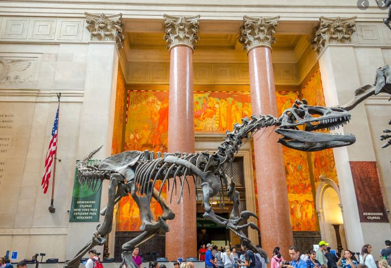 2020 03 13 18 50 09 american museum of natural history Google Search