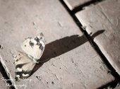Life fades away.....