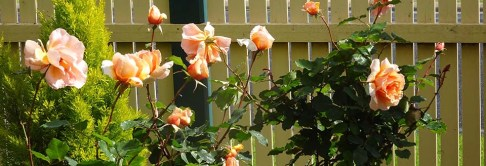 The Entrance Garden - 22 October 2016 - 2