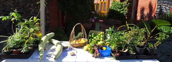 Produce Stall - 1