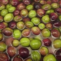 Navarre Olives - Curing - Menu Marker