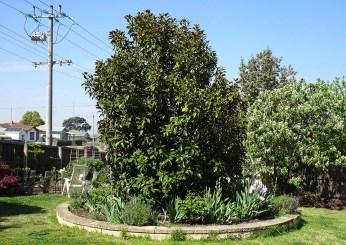 The Magnolia Bed